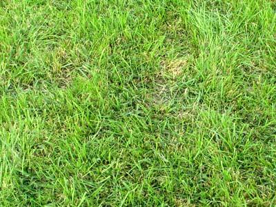 外側の芝生